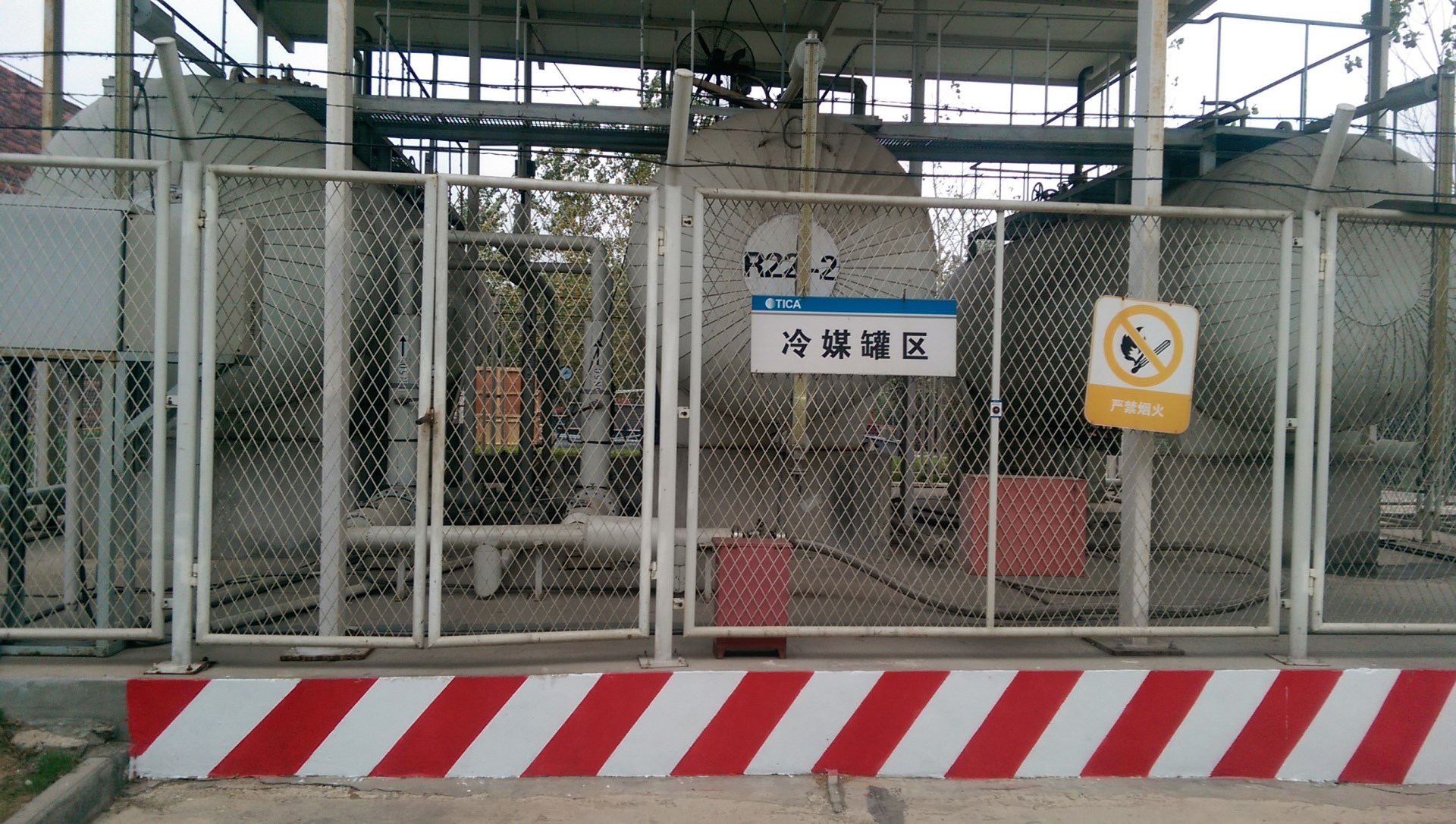 TICA-plant-7_7c045sk7